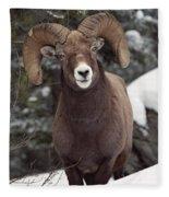 Bighorn Sheep, Maligne Canyon, Jasper Fleece Blanket