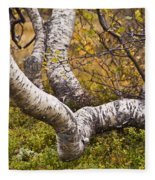 Birch Trees In Autumn Foliage Fleece Blanket