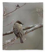 Bird - Eastern Phoebe - Very Contented Fleece Blanket