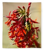 Black And Yellow Garden Spider 1 Fleece Blanket
