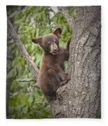 Black Bear Cub Hanging On Fleece Blanket