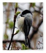 Black-capped Chickadee On Staff Fleece Blanket
