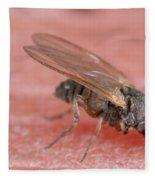 Black Fly Fleece Blanket
