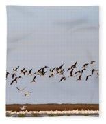 Black Skimmers In Flight Fleece Blanket