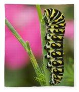 Black Swallowtail Caterpillar On Garden Fleece Blanket