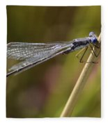 Blue Dasher Fleece Blanket