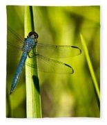 Blue Dragonfly 1 Fleece Blanket