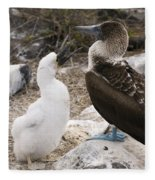 Blue-footed Booby Mother And Chick Fleece Blanket