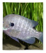 Bluegill Lepomis Macrochirus Fleece Blanket