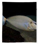 Bluespine Unicornfish Fleece Blanket