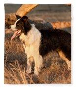 Border Collie At Sunset Fleece Blanket