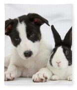 Border Collie Pup And Dutch Rabbit Fleece Blanket
