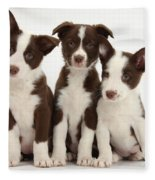 Border Collie Puppies Fleece Blanket