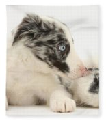 Border Collie Puppy With Rough-haired Fleece Blanket
