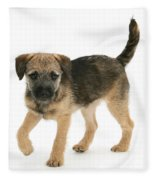 Border Terrier Puppy Fleece Blanket