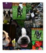 Boston Terrier Photo Collage Fleece Blanket
