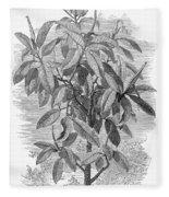 Botany: Ficus Elastica Fleece Blanket