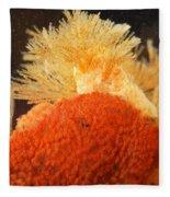 Bowerbanks Halichondria & Spiral-tufted Fleece Blanket