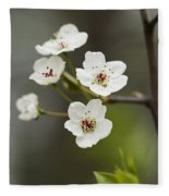 Bradford Callery Pear Tree Blossoms - Pyrus Calleryana Fleece Blanket