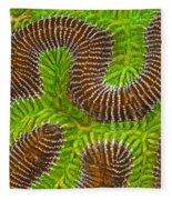 Brain Coral Fleece Blanket