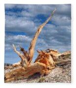 Bristlecone Pine In Repose Fleece Blanket
