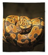 Brown And Black Snake Fleece Blanket