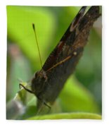 Brown Butterfly Fleece Blanket