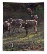 Brown Swiss Cows Coming Home Fleece Blanket