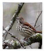 Brown Thrasher - Spot Fleece Blanket
