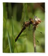 Bug Eyed Dragon Fly Fleece Blanket