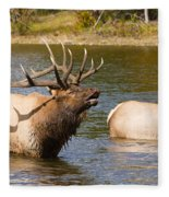 Bugling Bull Elk And 2 Female Cows In Estes Lake  Co Fleece Blanket