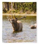 Bugling Bull Elk And Calf Colorado Rut 4 Fleece Blanket
