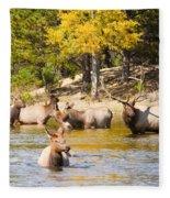 Bull Elk Watching Over Herd 4 Fleece Blanket