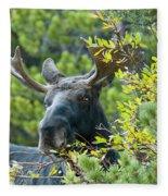Bull Moose At Dusk Fleece Blanket