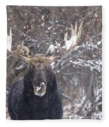 Bull Moose In Winter Fleece Blanket