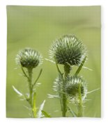 Bull Or Spear Thistle Buds- Cirsium Vulgare Fleece Blanket