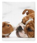 Bulldog Pup Face-to-face With Guinea Pig Fleece Blanket