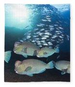 Bumphead Parrotfish Fleece Blanket
