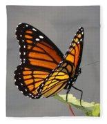 Butterfly - Sitting On The Green Fleece Blanket