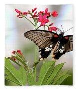 Butterfly Candy Fleece Blanket