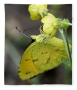 Butterfly - Yellow Sulphur On Yellow Fleece Blanket