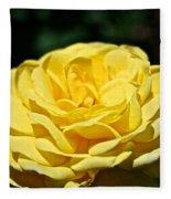 Buttery Rose Fleece Blanket