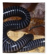 Caecilian Fleece Blanket