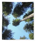 California Redwood Trees Fine Art Prints Forest Fleece Blanket