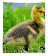 Canada Gosling Fleece Blanket