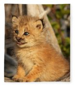 Canadian Lynx Kitten, Alaska Fleece Blanket