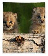 Canadian Lynx Kittens Looking Fleece Blanket