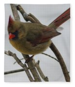 Cardinal Cold Winter Stare Fleece Blanket