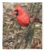 Cardinal In A Bush Fleece Blanket