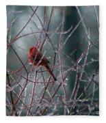 Cardinal On Ice Fleece Blanket
